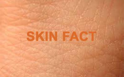 Интересни факти за кожата...... - Изображение 1
